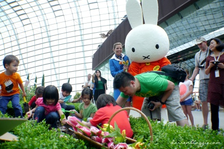Tulips Planting with Miffy at Gardens by the Bay